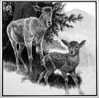 Red Hind Deer and Calf art by Reginald B Davis