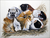 Guinea Pigs art by Reginald B Davis