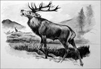 Roaring Stag art by Reginald B Davis