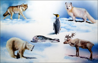 Animals From Opposite Ends of the Earth art by Rudolf Sablic