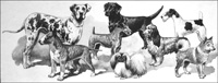 Domestic Dogs art by 20th Century unidentified artist