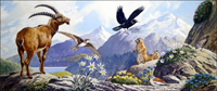 Wildlife of Central Europe art by G W Backhouse