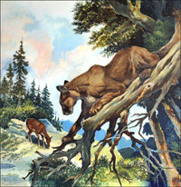 Cougar Patrol art by G W Backhouse