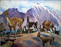 Llamas art by G W Backhouse