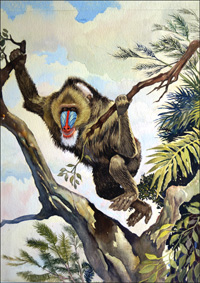 Mandrill art by G W Backhouse