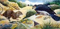 Surprise for a Rat art by G W Backhouse