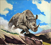 White Rhinoceros art by G W Backhouse