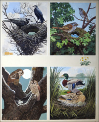 All Sorts of Birds and their Nests - 4 art by John F Chalkley