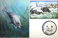 Common or Grey Seal art by John F Chalkley