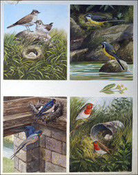 All Sorts of Birds and their Nests - 2 art by John F Chalkley