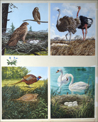 All Sorts of Birds and their Nests - 3 art by John F Chalkley