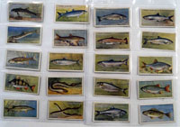 Fresh Water Fishes: Full Set of 50 Cigarette Cards (1934)
