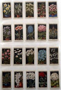 Flower Culture in Pots: Full Set of 50 Cigarette Cards (1925)