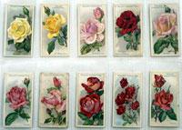 Roses: Full Set of 50 Cigarette Cards (1912)