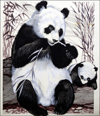 Panda Mother and Cub art by Reginald B Davis