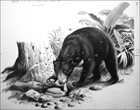 Malayan Sun Bear art by Reginald B Davis
