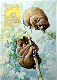 Baby Lemurs art by Reginald B Davis