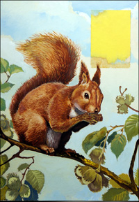 Hungry Red Squirrel art by Reginald B Davis