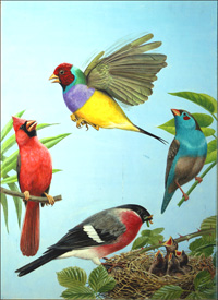 Tropical Birds art by Reginald B Davis