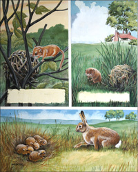 Animals in the Fields art by Don Forrest