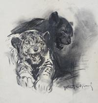 Wild Cats art by Giorgio de Gaspari