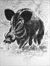 Wild Boar art by George Hawthorn