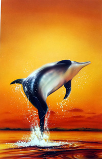 Dolphin Sunrise book cover art art by Barry Jones