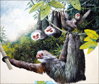 'Hanging Around - The Sloth by Kenneth Lilly