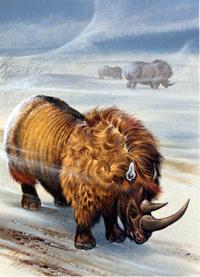 Woolly Rhinoceros by Bernard Long