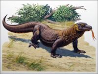 Komodo Dragon art by Bernard Long