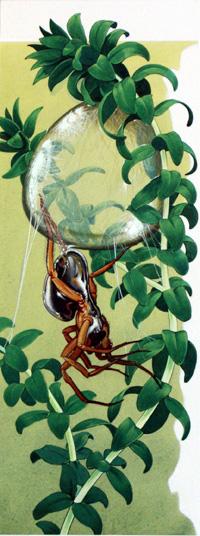 Water Spider by Bernard Long