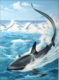 Thresher Shark art by Bernard Long