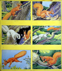 Little Red Squirrel - Competition art by Harry Pettit