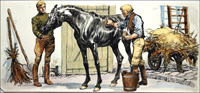 Black Beauty - TLC art by Carlos Roume